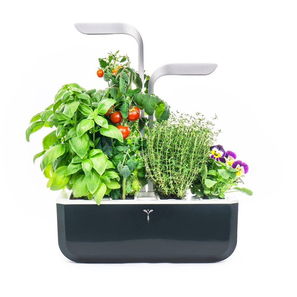 Herbes Aromatiques D Intérieur potager d'intérieur véritable® - tom press